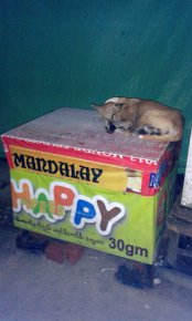 Happy dog, Yangon